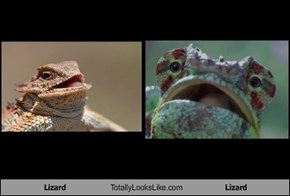 Lizard Totally Looks Like Lizard