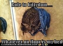Rule to kittydom.....  Whatever on floor is my bed
