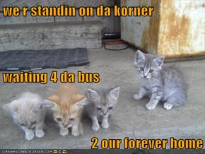 we r standin on da korner waiting 4 da bus 2 our forever home