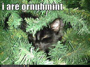 i are ornuhmint