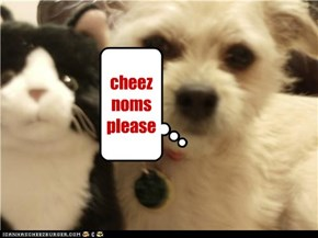 cheez noms please