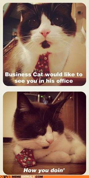 Business Cat: I'd Feel More Comfortable With This if We Had a Human Resources Representative in the Room...
