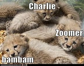 Charlie Zoomer bambam