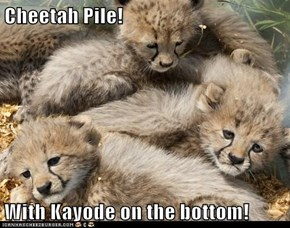 Cheetah Pile!  With Kayode on the bottom!