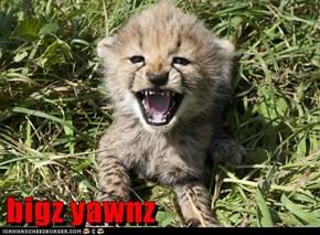 bigz yawnz