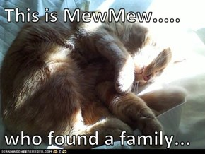 This is MewMew.....  who found a family...