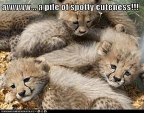 awwww... a pile of spotty cuteness!!!
