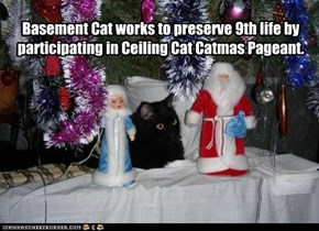 Basement Cat works to preserve 9th life by participating in Ceiling Cat Catmas Pageant.