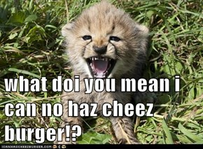 what doi you mean i can no haz cheez burger!?