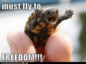 must fly to  FREEDOM!!!