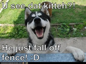 U see dat kitteh?!  He just fall off fence! :D