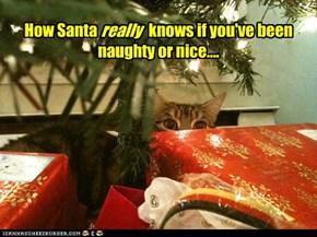 Santa's Little Spy