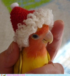 The Twelve Squees of Christmas: Squawkin' in a Winter Wonderland