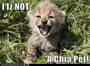 I Iz NOT  A Chia Pet!