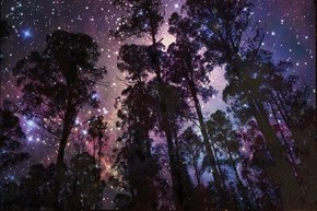 Forest of Infinite Space