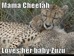 Mama Cheetah  Loves her baby Zuzu