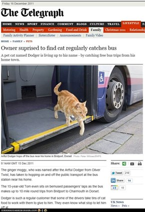 Dodger: the kitteh that rides a bus