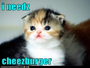 i needz  cheezburger