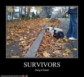 Survivors.