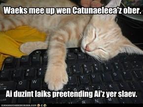 Happee Caturnaeleea!