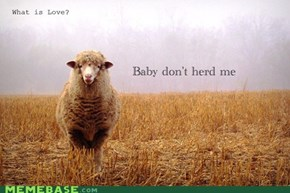 You're So Baaaaaaaaad....
