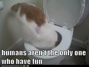 humans aren't the only one who have fun