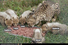 Cheetah Cub Names