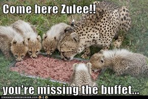 Come here Zulee!!  you're missing the buffet...