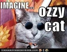 ozzy  cat