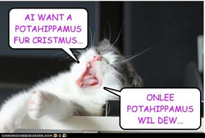 AI WANT A POTAHIPPAMUS FUR CRISTMUS...