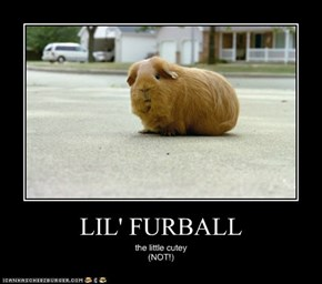 LIL' FURBALL