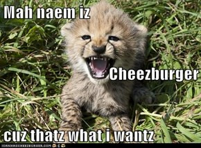 Mah naem iz Cheezburger cuz thatz what i wantz