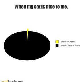 When my cat is nice to me.