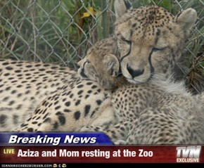 Breaking News - Aziza and Mom resting at the Zoo