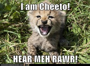 I am Cheeto!  HEAR MEH RAWR!