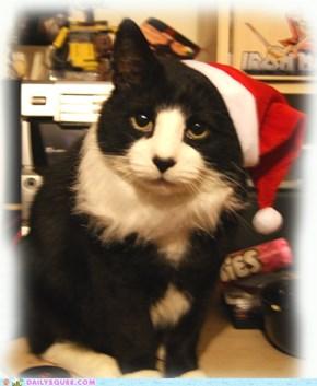Dave, my festive Santa kitteh!!