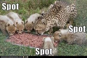 Spot Spot Spot