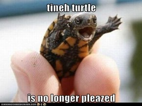 tineh turtle  is no longer pleazed