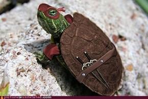 Ninja Turtle IRL