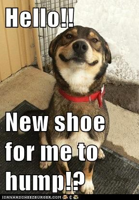 Hello!!  New shoe for me to hump!?