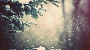 Serene Snowfall