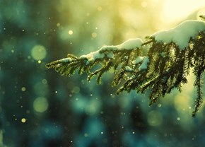 Snow Fall in the Forest