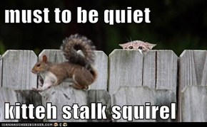 must to be quiet  kitteh stalk squirel