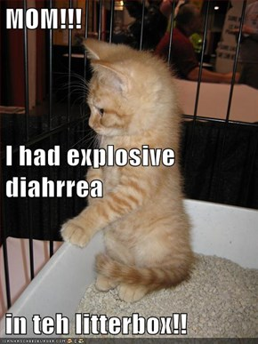 MOM!!! I had explosive diahrrea in teh litterbox!!