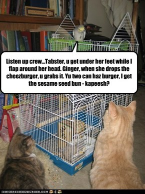 Listen up crew...Tabster, u get under her feet while I flap around her head. Ginger, when she drops the cheezburger, u grabs it. Yu two can haz burger, I get the sesame seed bun - kapeesh?