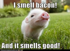 I smell bacon!  And it smells good!