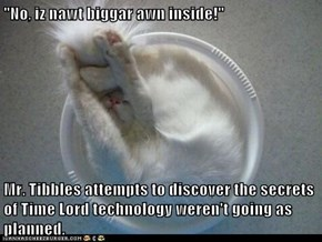 """""""No, iz nawt biggar awn inside!""""  Mr. Tibbles attempts to discover the secrets of Time Lord technology weren't going as planned."""