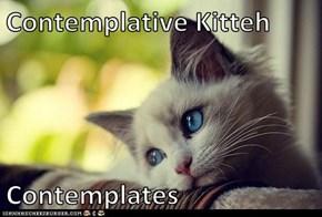 Contemplative Kitteh  Contemplates