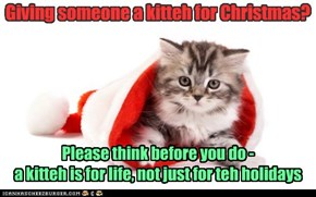 A Kitteh is a Present for Life, Not just for teh Season.