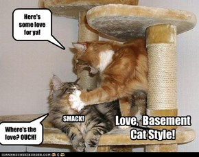Love, Basement Cat Style!